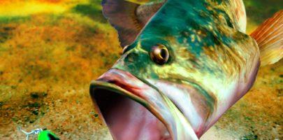sega-bass-fishing