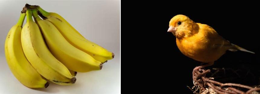 jaune_canari_banane