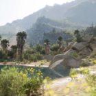 Forza Horizon 5 Desert
