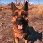 Xbox et Bethesda verse 10 000 dollars à une association animale en hommage à Canigou de Fallout 4